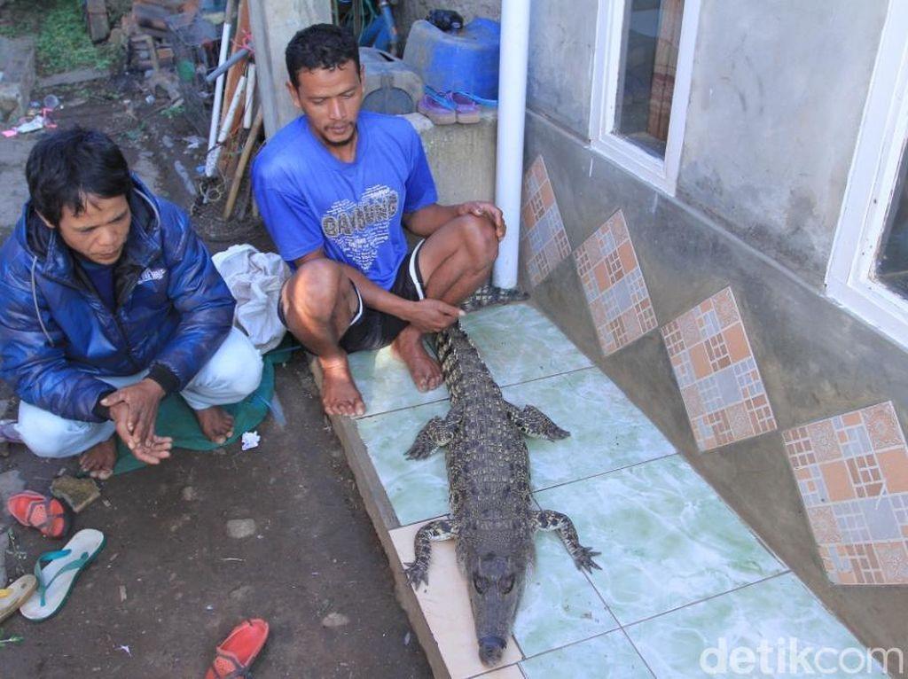Cerita Warga Bandung Tangkap Buaya di Sungai Citarum