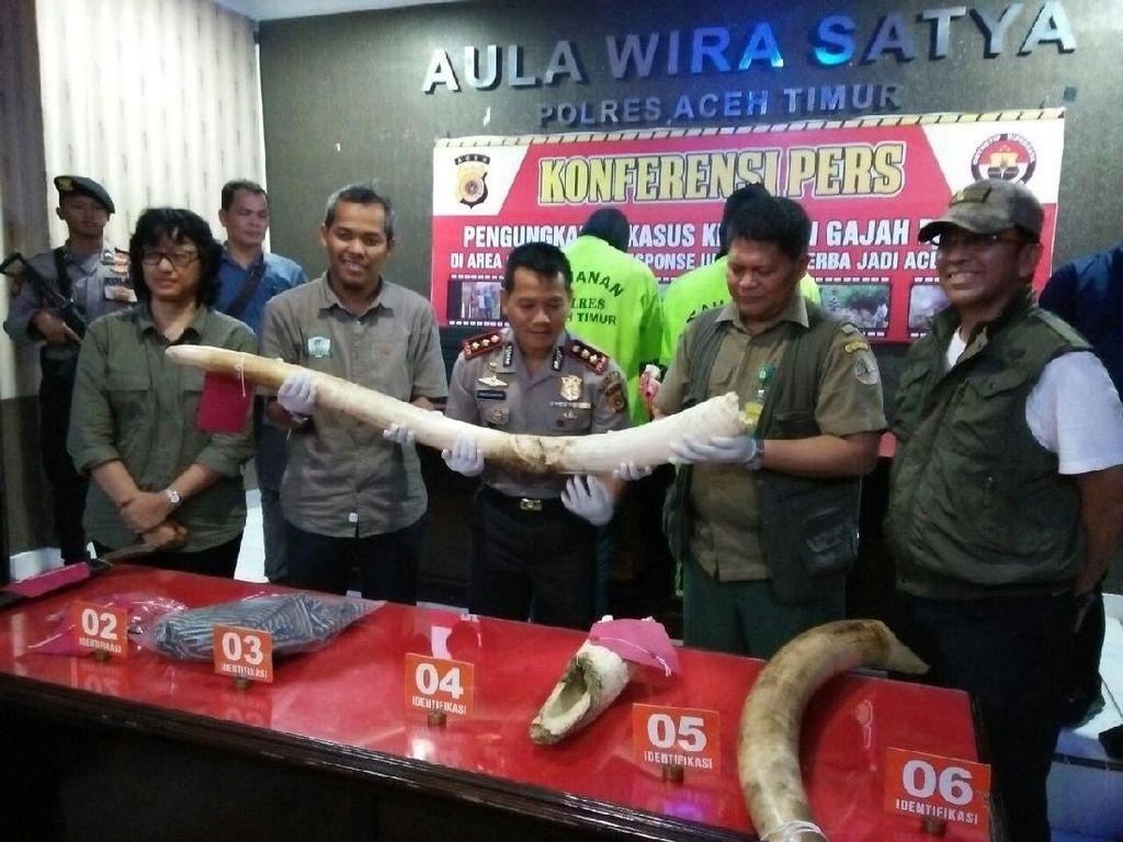KLHK: Pembunuhan Gajah Jinak di Aceh Kejahatan Luar Biasa