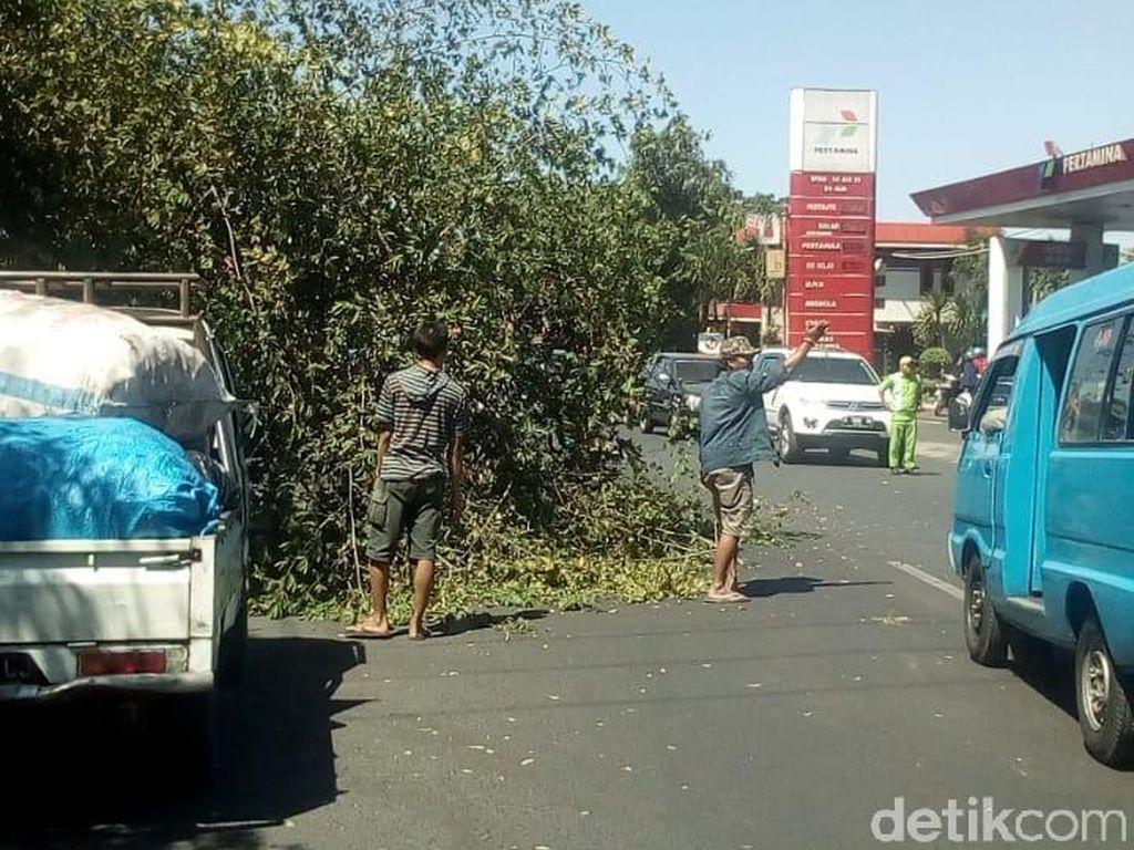 Tekanan Pantai Sumatera, BMKG: Hati-hati Pohon Tumbang