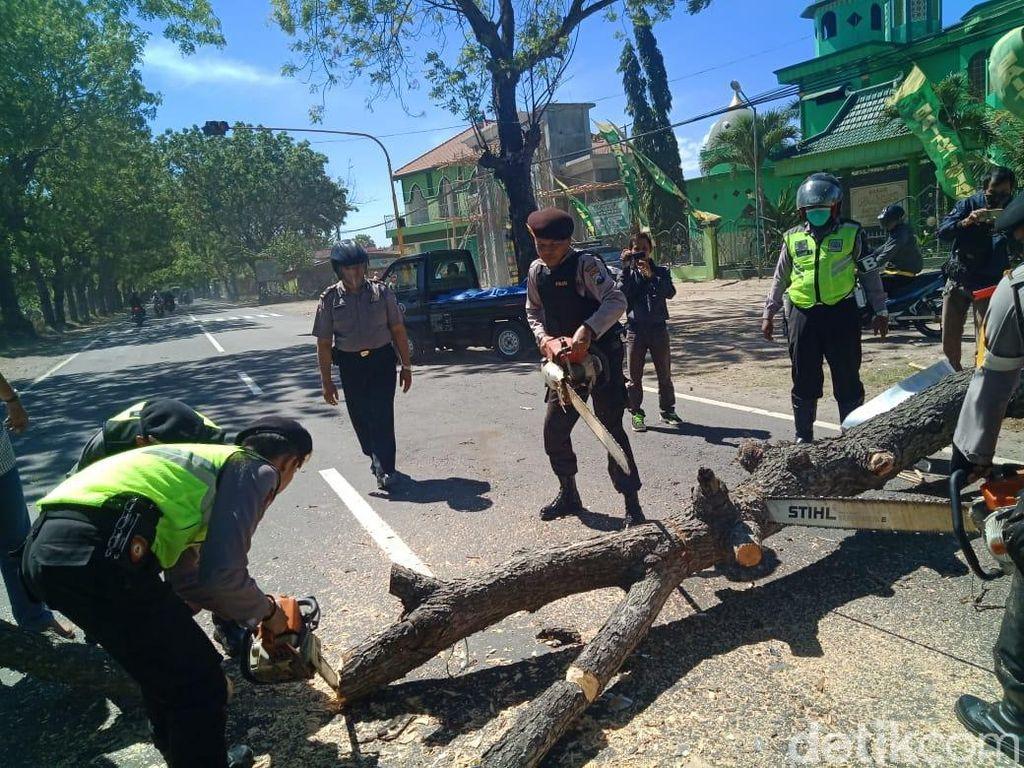 Biker Tewas Tertimpa Pohon Tumbang di Jalur Ponorogo-Madiun