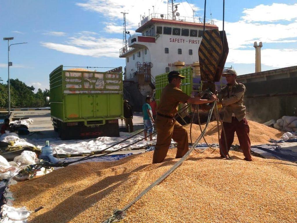 Ekspor Jagung Sulteng ke Filipina Capai 14 Ribu Ton
