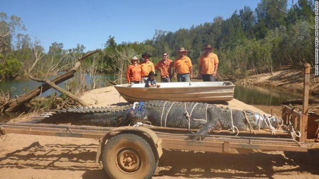 Penampakan Buaya Raksasa 600 Kg yang Ditangkap di Australia