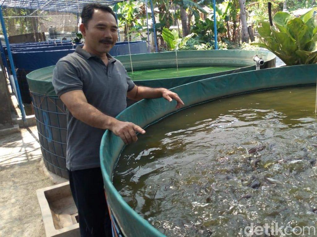 Cerita Komarudin Sukses Budidaya Lele yang Tak Amis dengan Bioflok