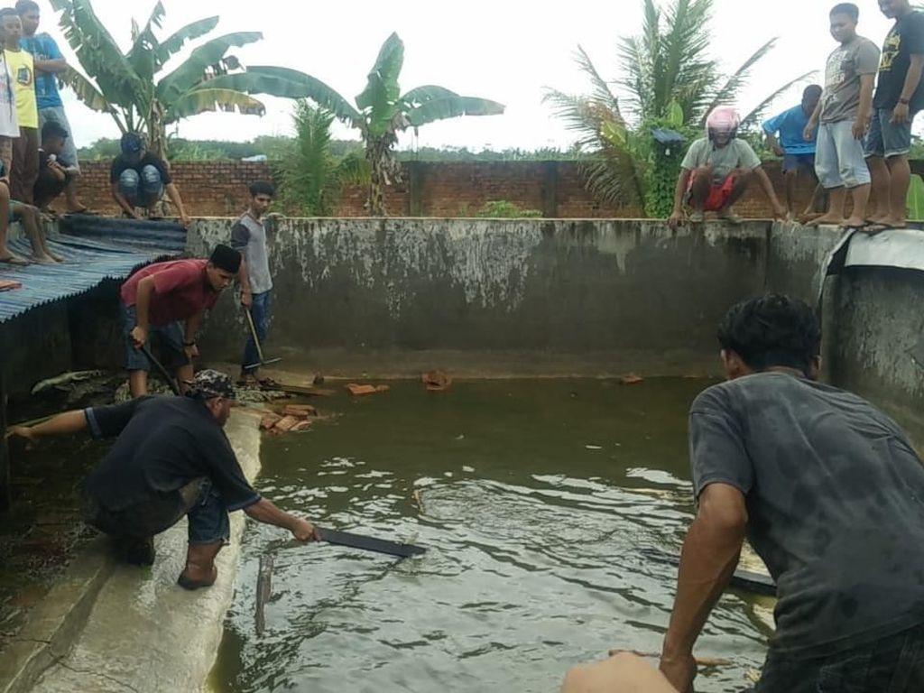 KLHK: 292 Buaya yang Dibantai di Sorong Semuanya Milik Pemerintah