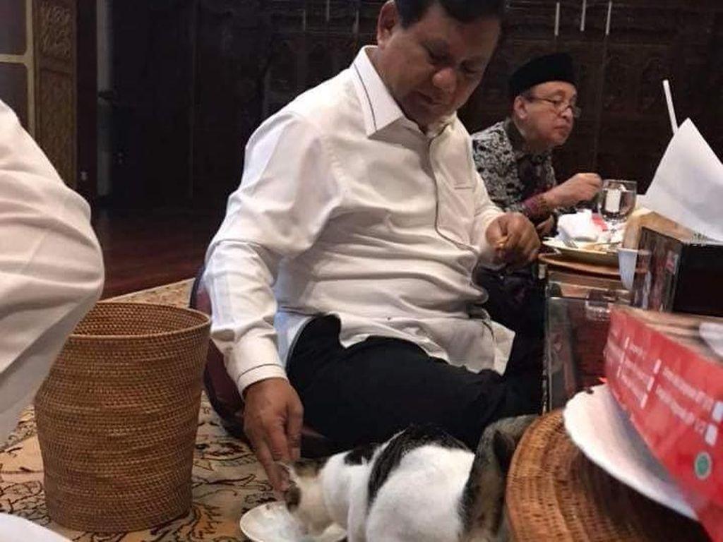 Viral Foto Prabowo Beri Makan Kucing, Gerindra: Bukan Akting