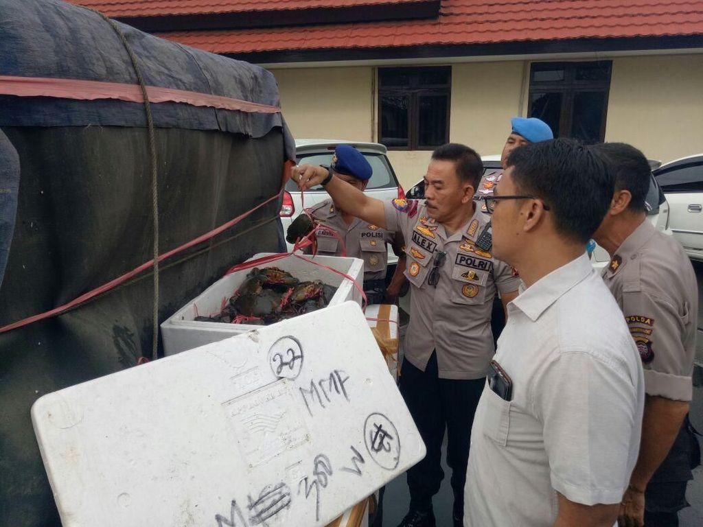 Polda Kalbar Gagalkan Penyelundupan 3.801 Kepiting ke Malaysia