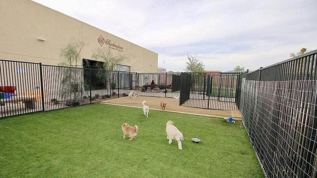 Foto: Kamar Suites Hotel Khusus Anjing