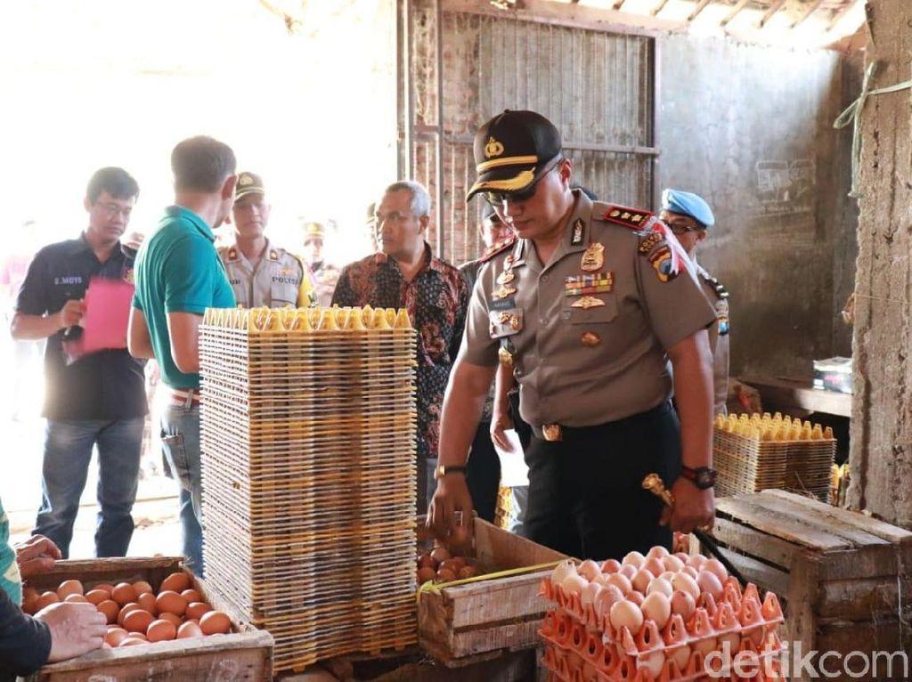Harga Telur di Tuban Mahal, Satgas Pangan Turun ke Pasar