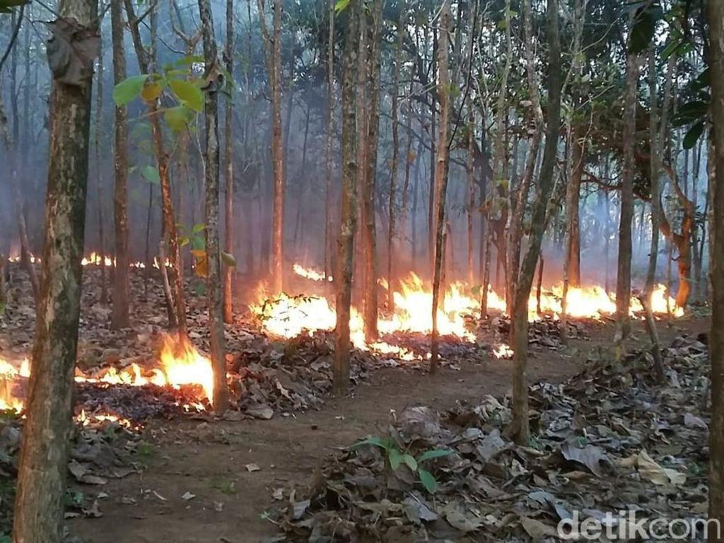 Musim Kemarau, Hutan di Wilayah Bojonegoro Terbakar 4 Kali