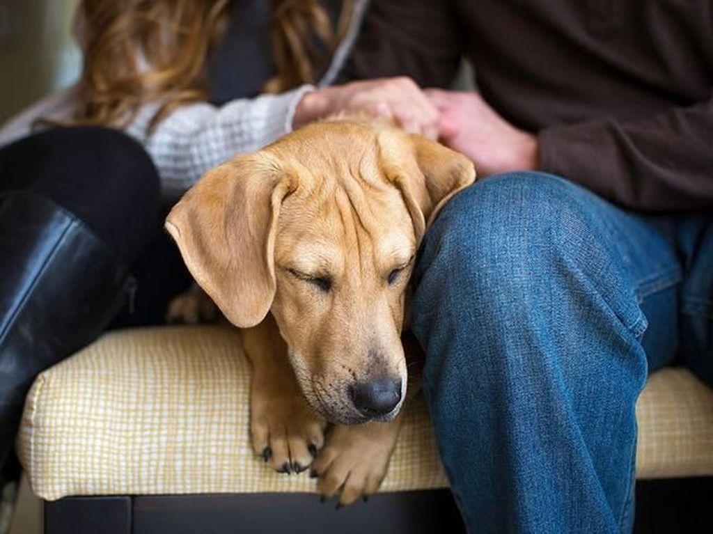Deretan Foto Pemenang Fotografi Anjing yang Menggemaskan