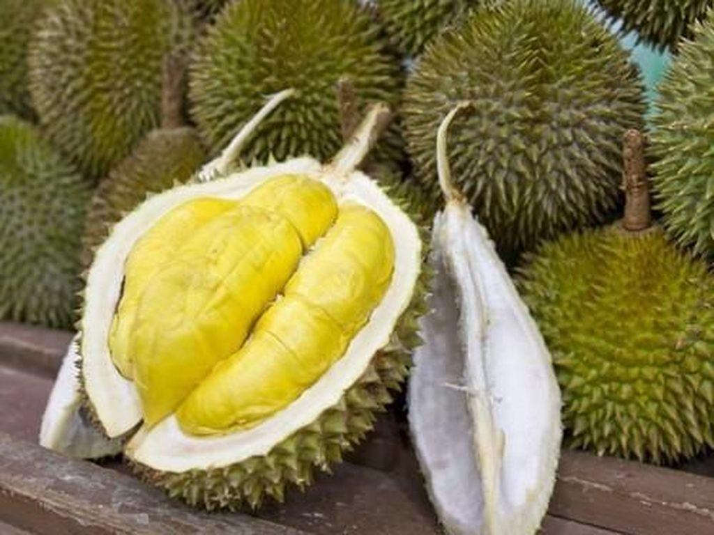 Cara Mengemas Durian dalam Pesawat agar Baunya Tak Keluar