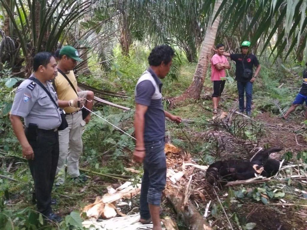 Kena Perangkap Babi, Beruang Madu di Riau Diselamatkan Warga