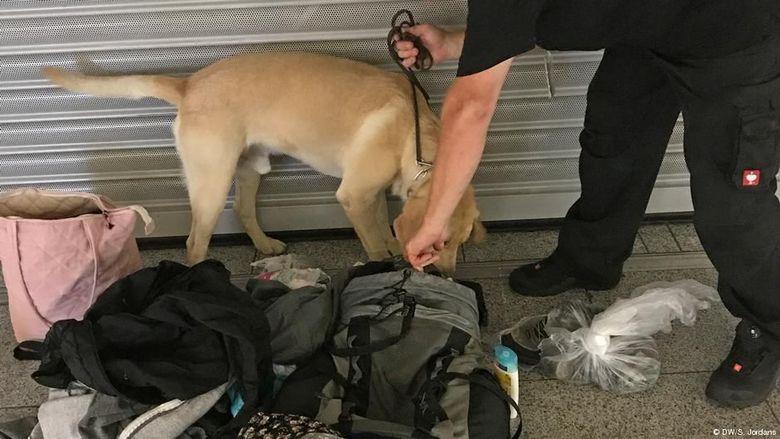 Di Bandara Jerman Ada Anjing Pelacak yang Punya Tugas Khusus