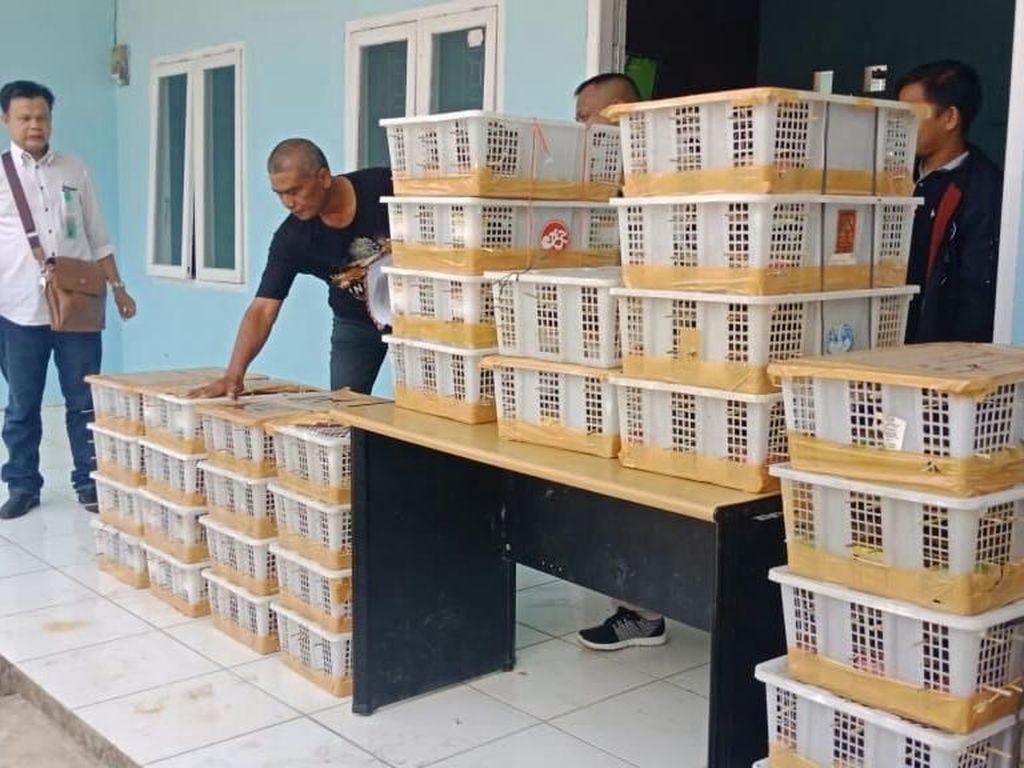 Penyelundupan Ribuan Kolibri dan Gelatik dalam Kotak Digagalkan