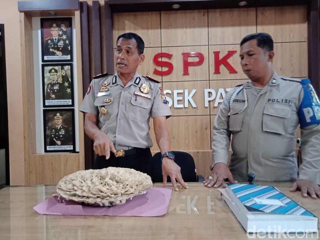 Polisi Cabut Jamur yang Tumbuh di Makam Warga Jember