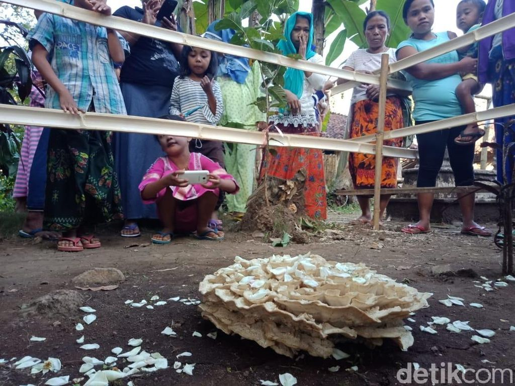 Siapa Pemilik Makam yang Ditumbuhi Jamur di Jember?
