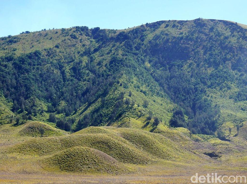 Foto: Bukit Teletubbies yang Sedang Hijau-hijaunya