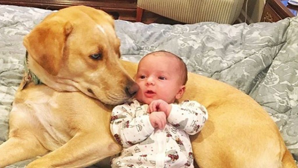 Potret Persahabatan Bayi Imut dengan Anjing Penjaganya