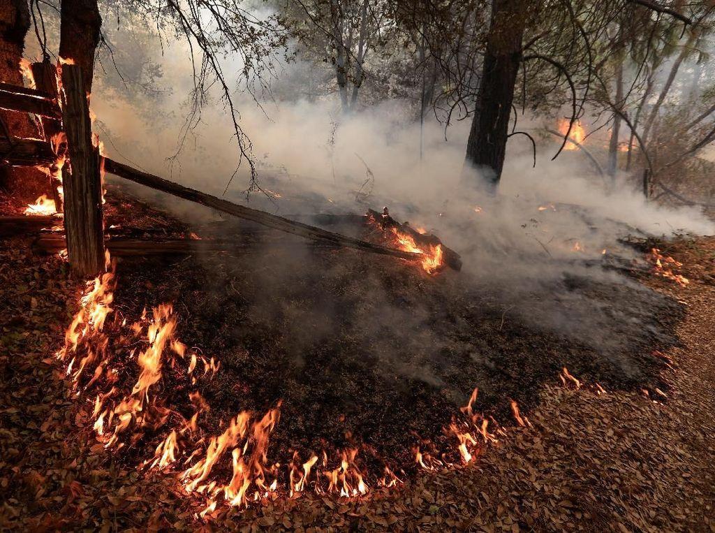 Kebakaran Hutan di California Tewaskan 6 Orang Termasuk 2 Bocah