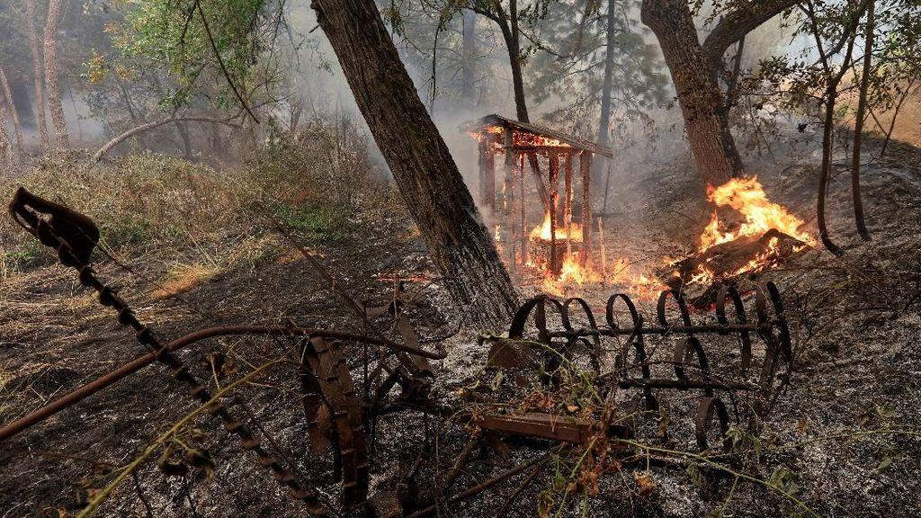 Ganasnya Kebakaran Hutan di California yang Tewaskan 6 Orang