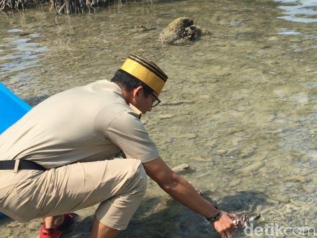 Momen Sandiaga Lepas Penyu Owo-Owi di Pulau Sebira