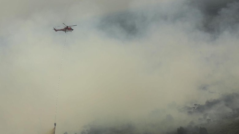 885 Hektare Hutan Jambi Terbakar, Ini Sebarannya