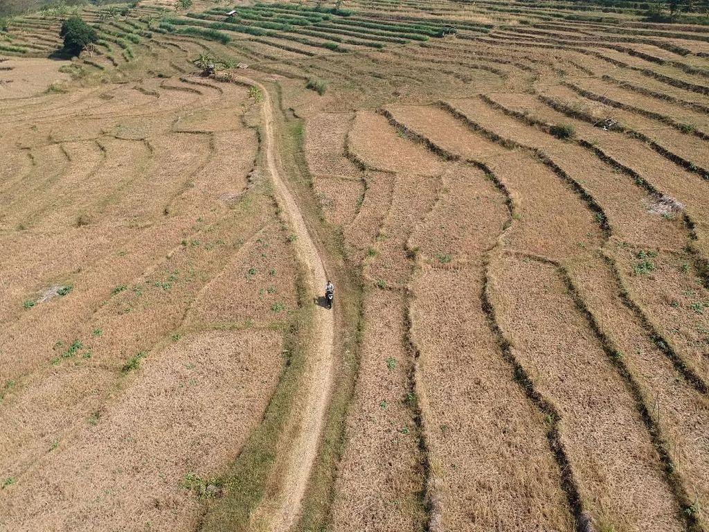 Kemarau Tiba, Beberapa Daerah di Indonesia Terancam Kekeringan