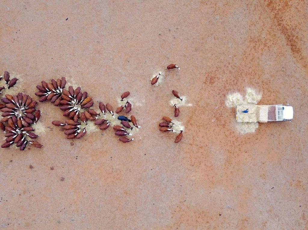 Cerita di Tanah Kering Australia