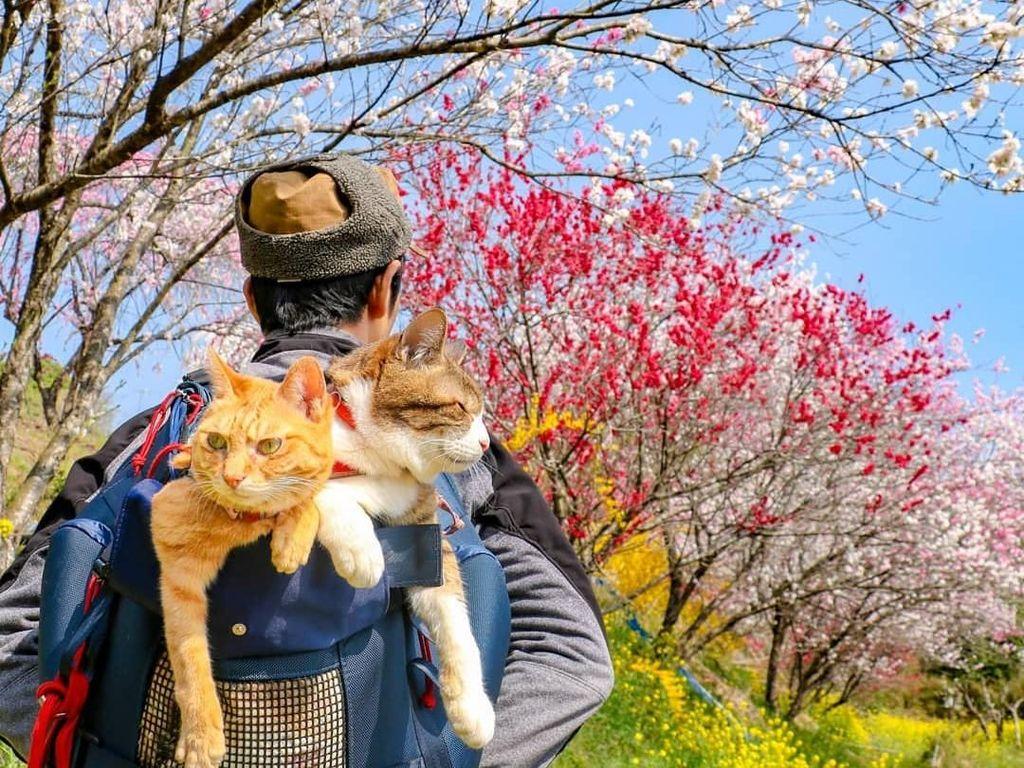 Lucu! Kisah Pebisnis yang Traveling Bareng Dua Kucingnya