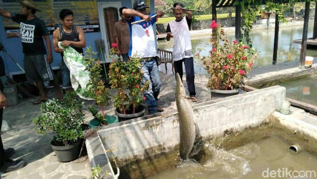 Ini Ikan Aligator yang Disita dari Pehobi di Pangandaran
