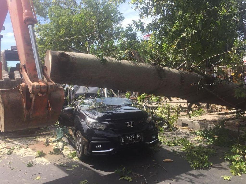 Bruk! Pohon Tumbang Tewaskan Pengendara Motor di Cirebon