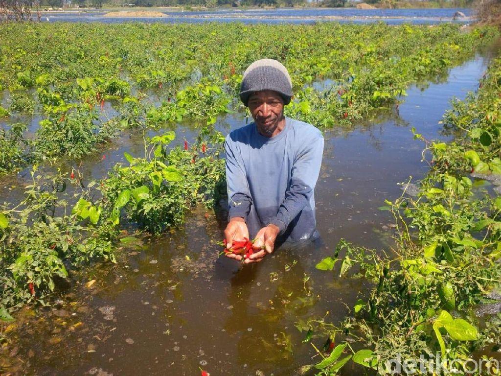 Lahan Pertanian Bantul yang Kebanjiran Air Pasang Laut Selatan Meluas