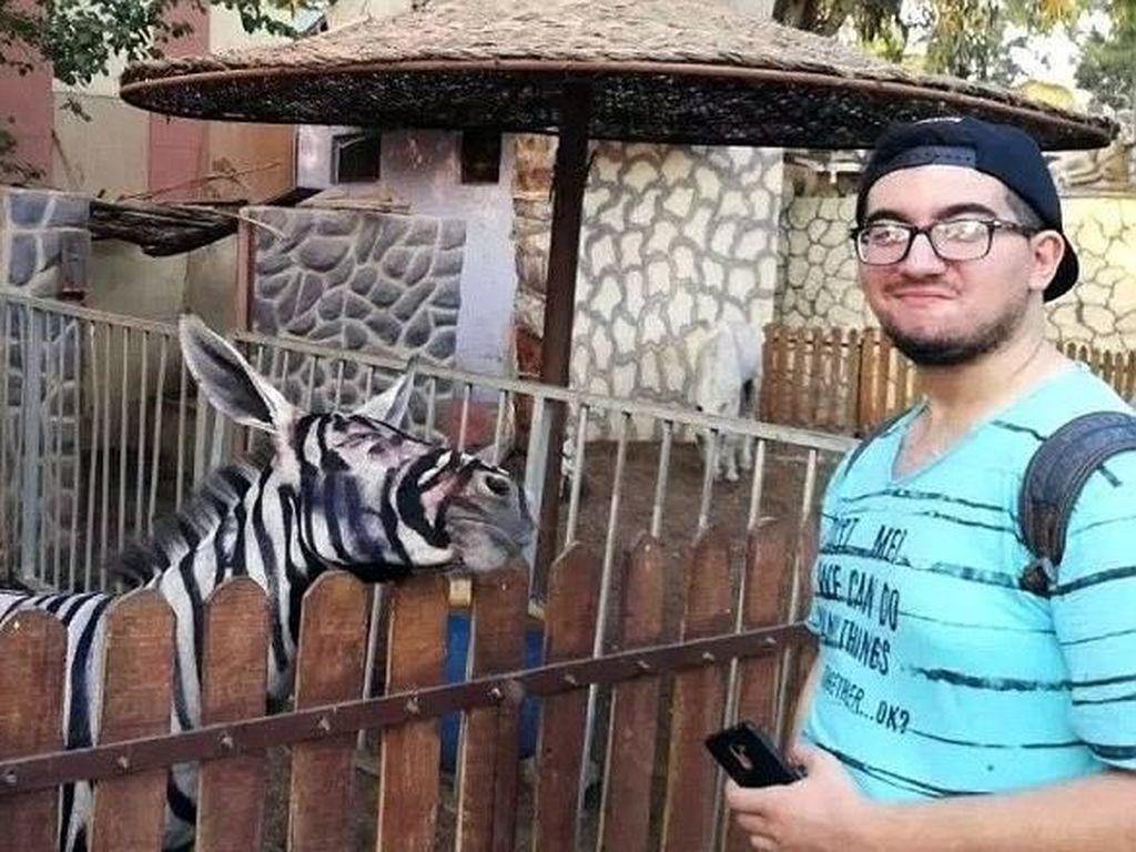 Duh! Keledai di Kebun Binatang Mesir Dicat Belang Biar Mirip Zebra
