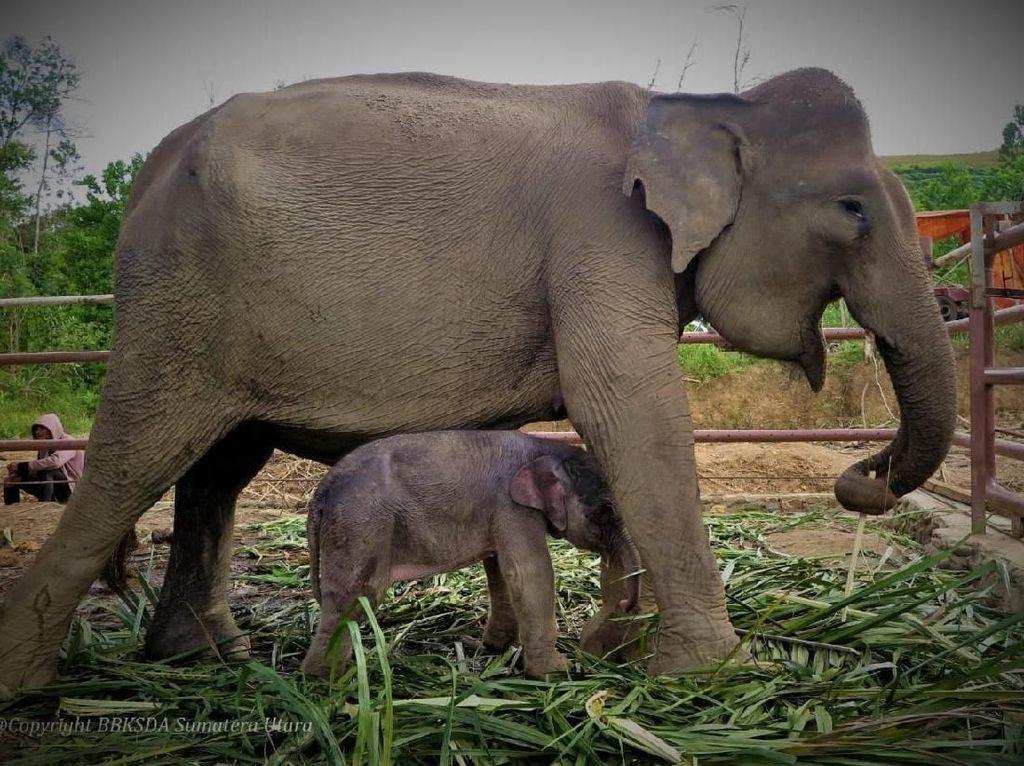 BBKSDA Riau dan 7 Perusahaan Sepakati Peningkatan Konservasi Gajah