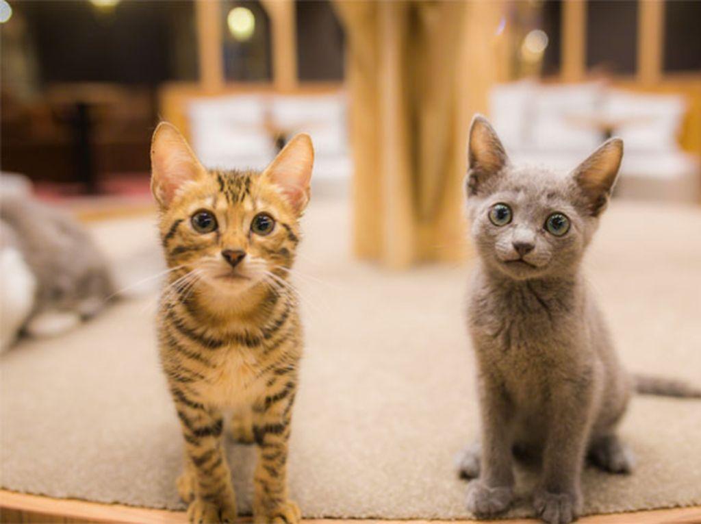 Menggemaskan! Kucing-Kucing Ini Selalu Temani Seorang Biksu Sarapan