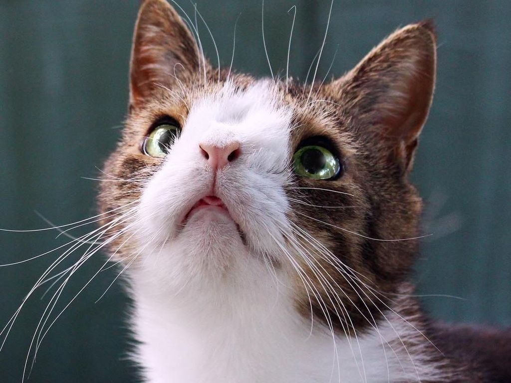 Hai Monty! Potret Kucing Menggemaskan dengan Kelainan Kromosom