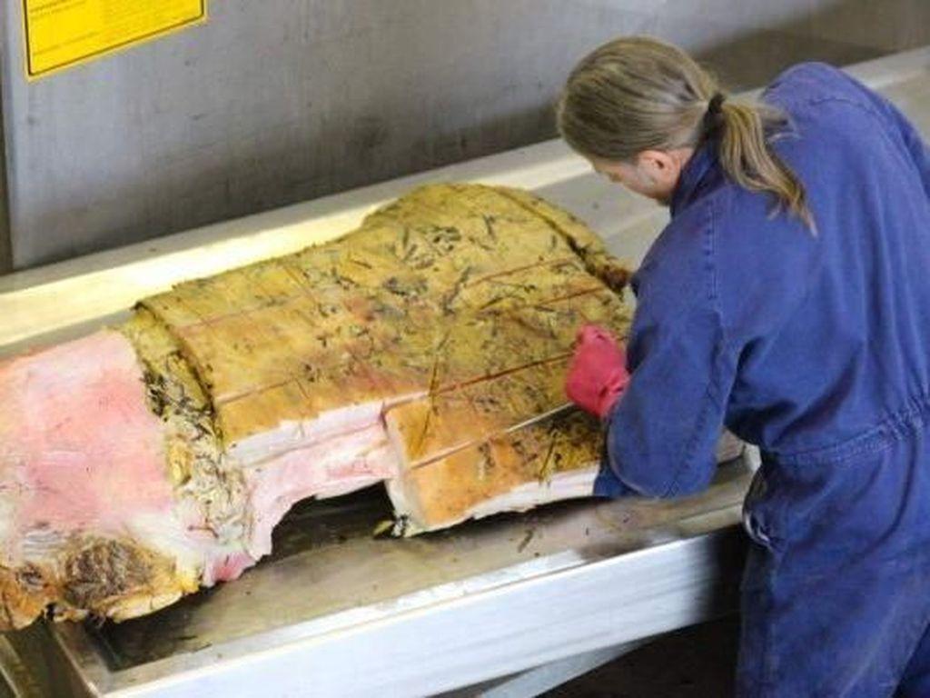 Mengintip Proses Pengawetan Kerangka Ikan Paus di Australia Selatan