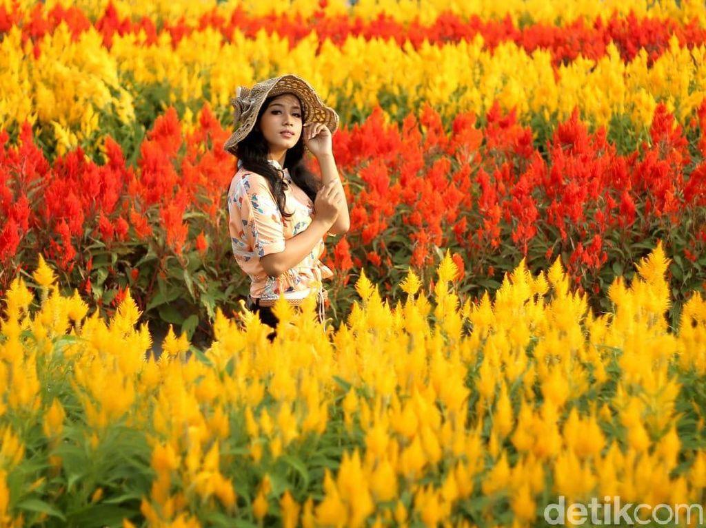 Taman Bunga Magelang Ala Keukenhof