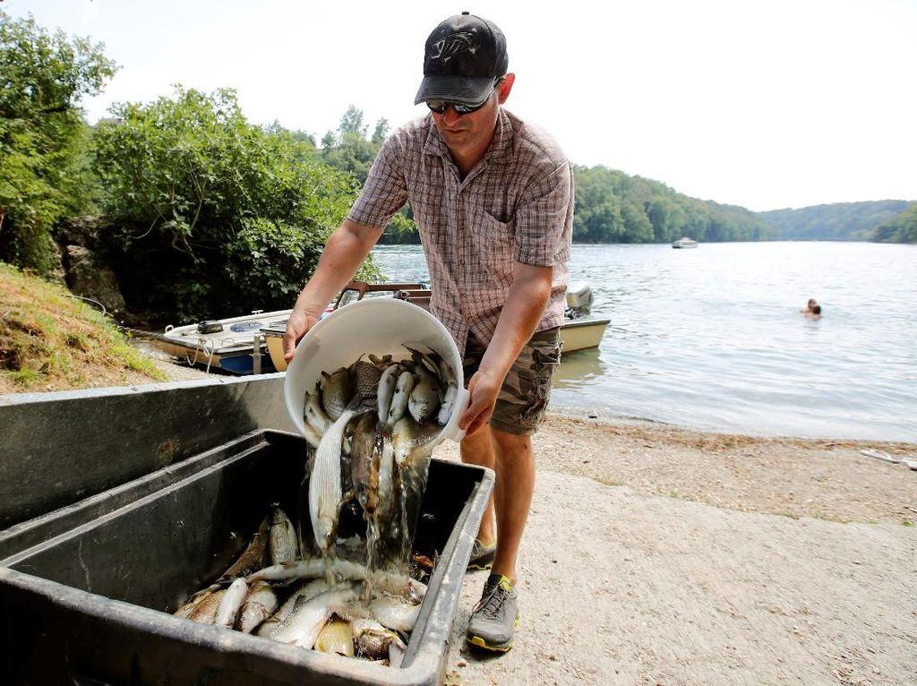 Ganasnya Gelombang Panas di Swiss Bikin 1 Ton Ikan Mati