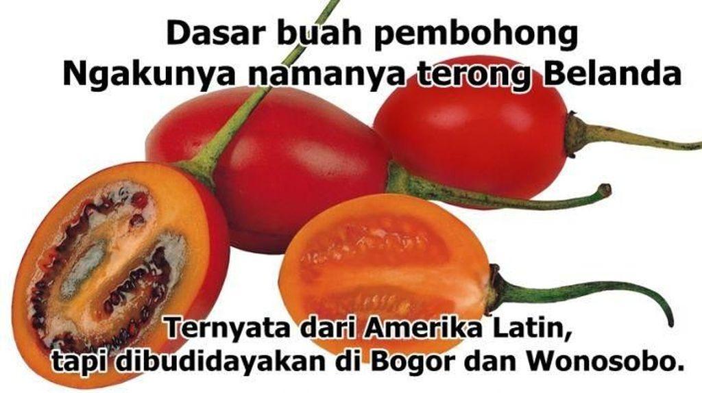 Duh! 8 Meme Kebohongan Makanan Ini Ungkap Fakta Sebenarnya
