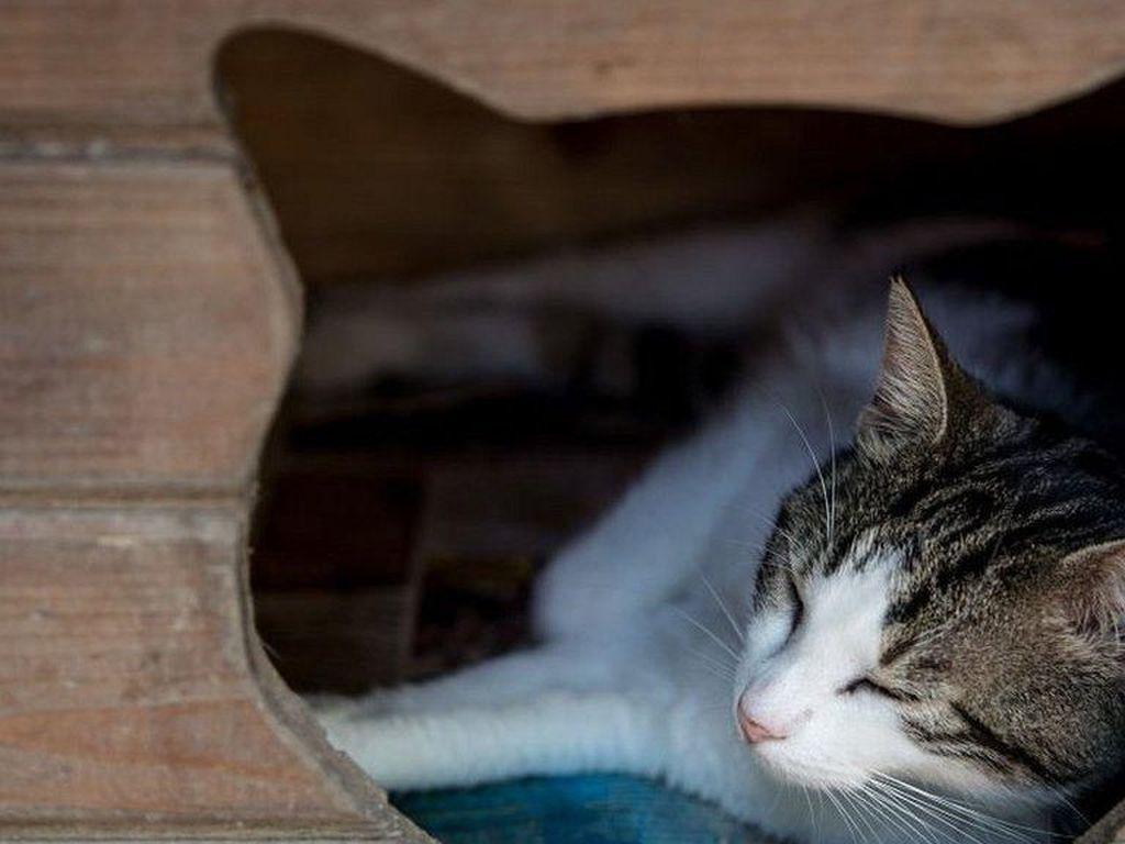 Horor! Bayangan Kucing Ini Tiba-tiba Noleh Sendiri
