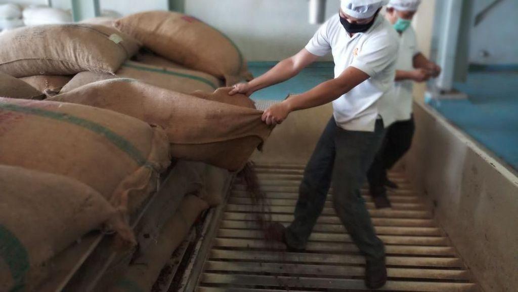 Kementan Genjot Ekspor Cocoa Butter Kendari ke Belanda