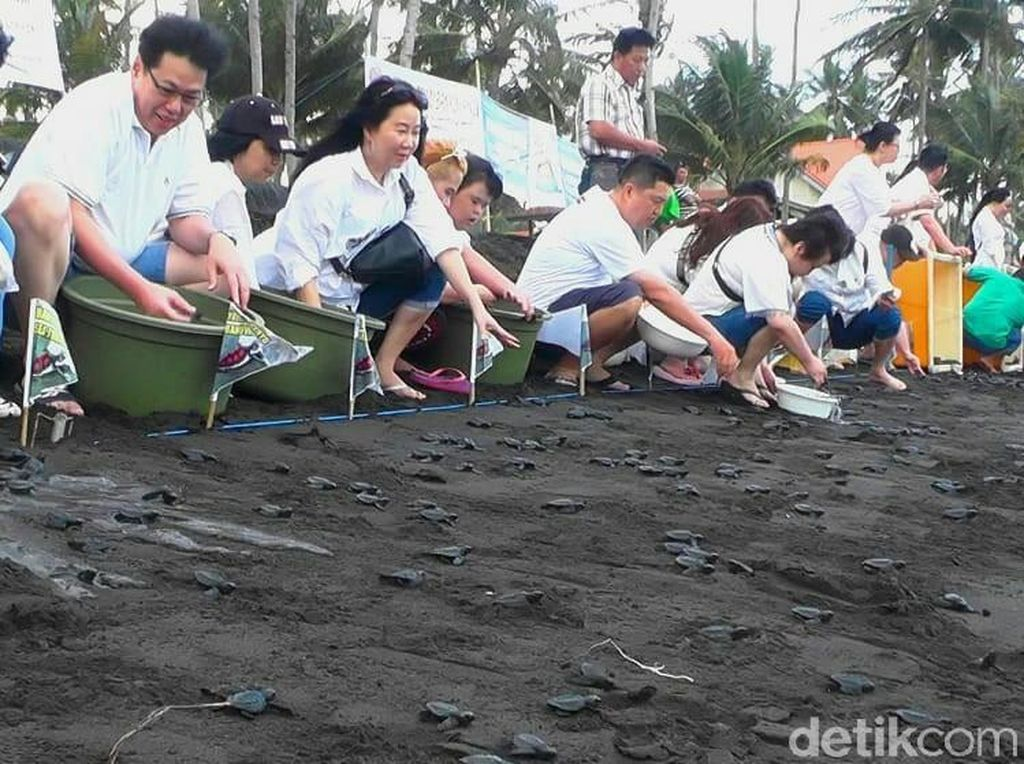 Ini Alasan Menarik Berwisata di Pantai Solong Banyuwangi