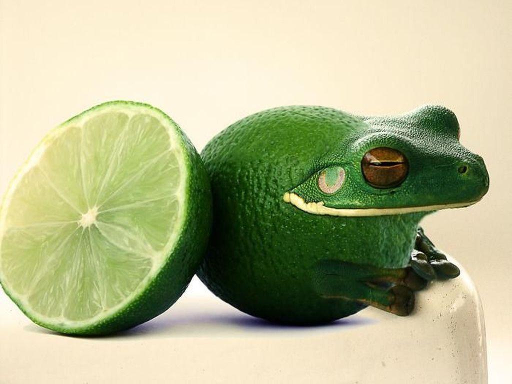 Begini Kerennya Saat Seniman Photoshop Gabungkan Foto Binatang dan Buah
