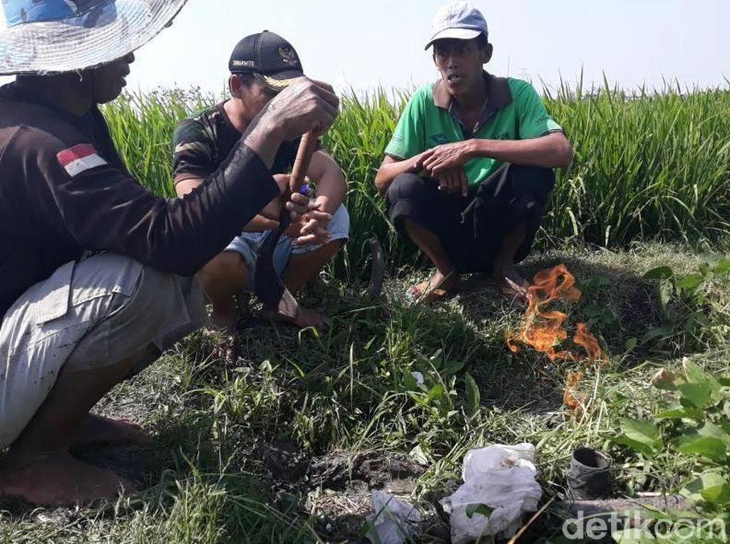 Sebelum Ditemukan Semburan Baru, Warga Mencium Bau Gas di Sawah