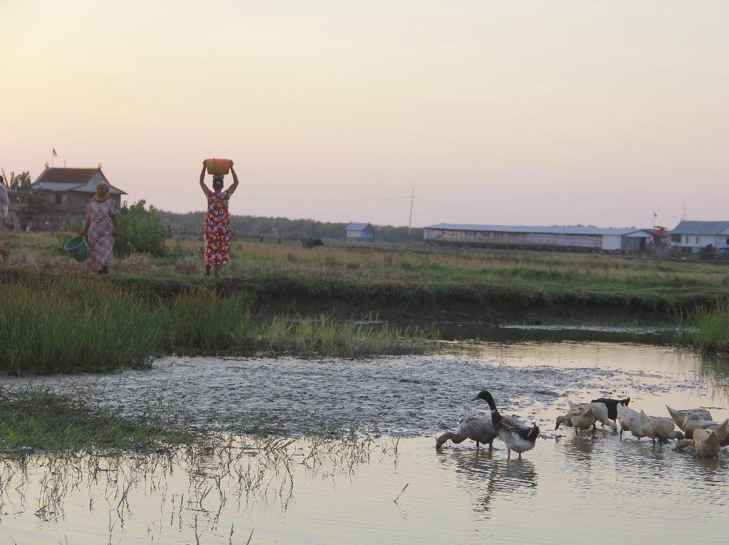 Derita Warga Sulsel Berebut Air dengan Bebek di Empang