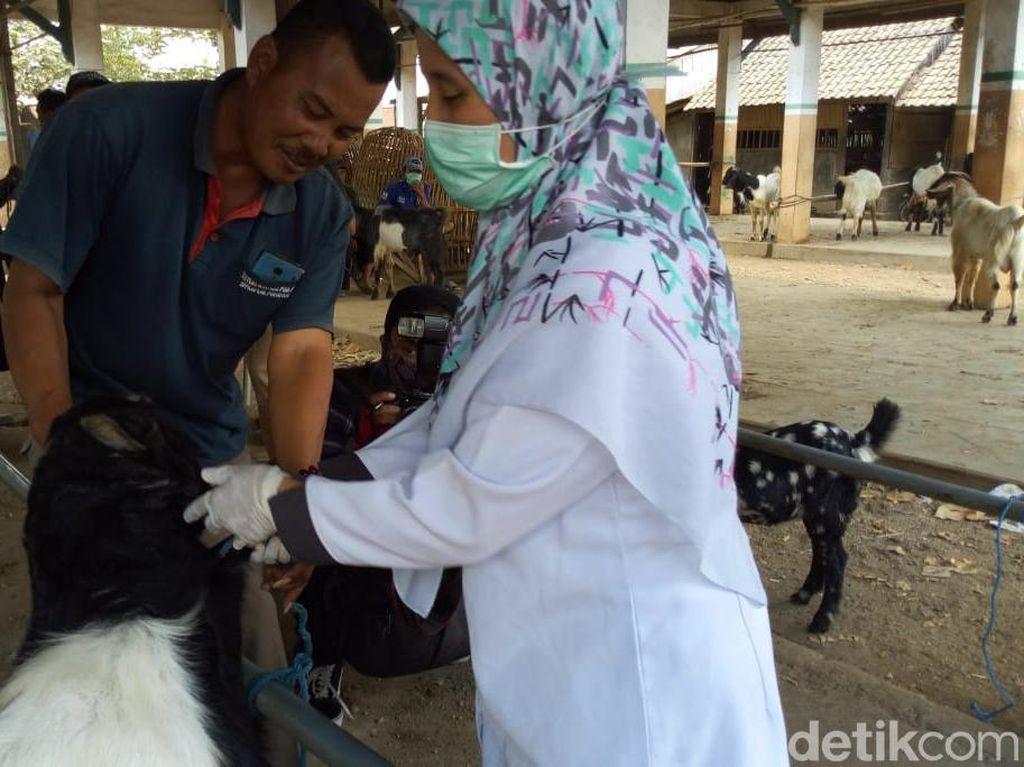 Sidak Hewan Kurban di Ponorogo, Petugas Temukan Mata Sapi Cacingan