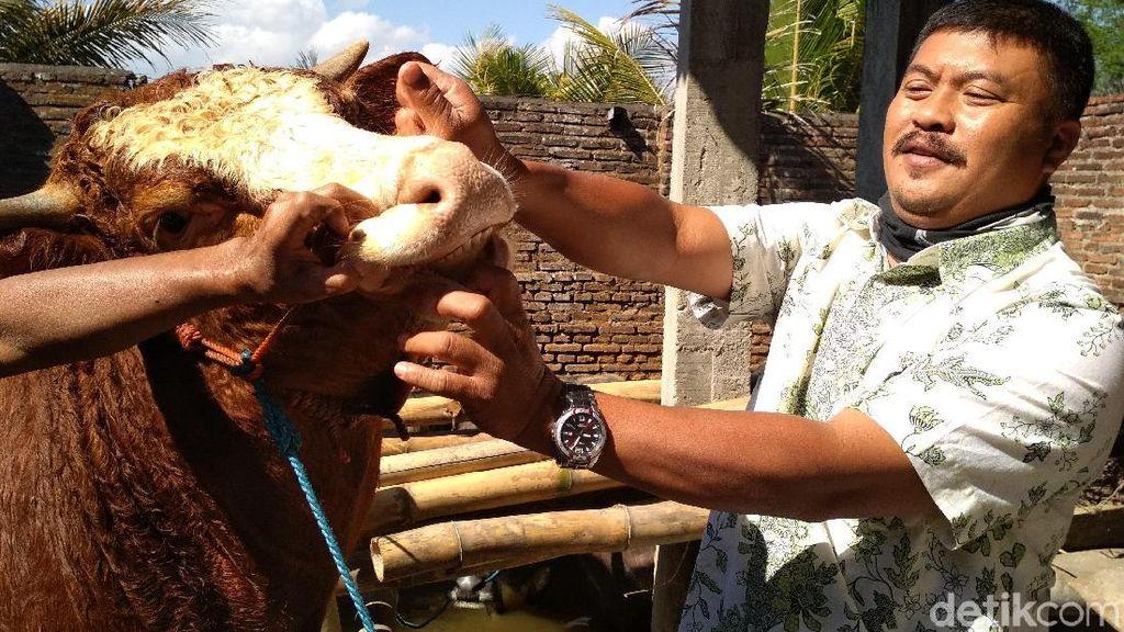 Sidak Pedagang Sapi, Tim Veteriner Temukan Hewan Tak Layak Kurban