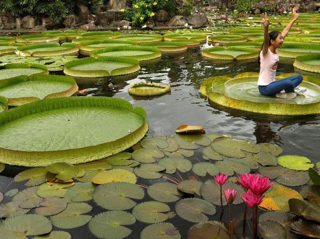 Bunga Teratai: Manfaat Hingga Filosofi yang Baik untuk Hidup