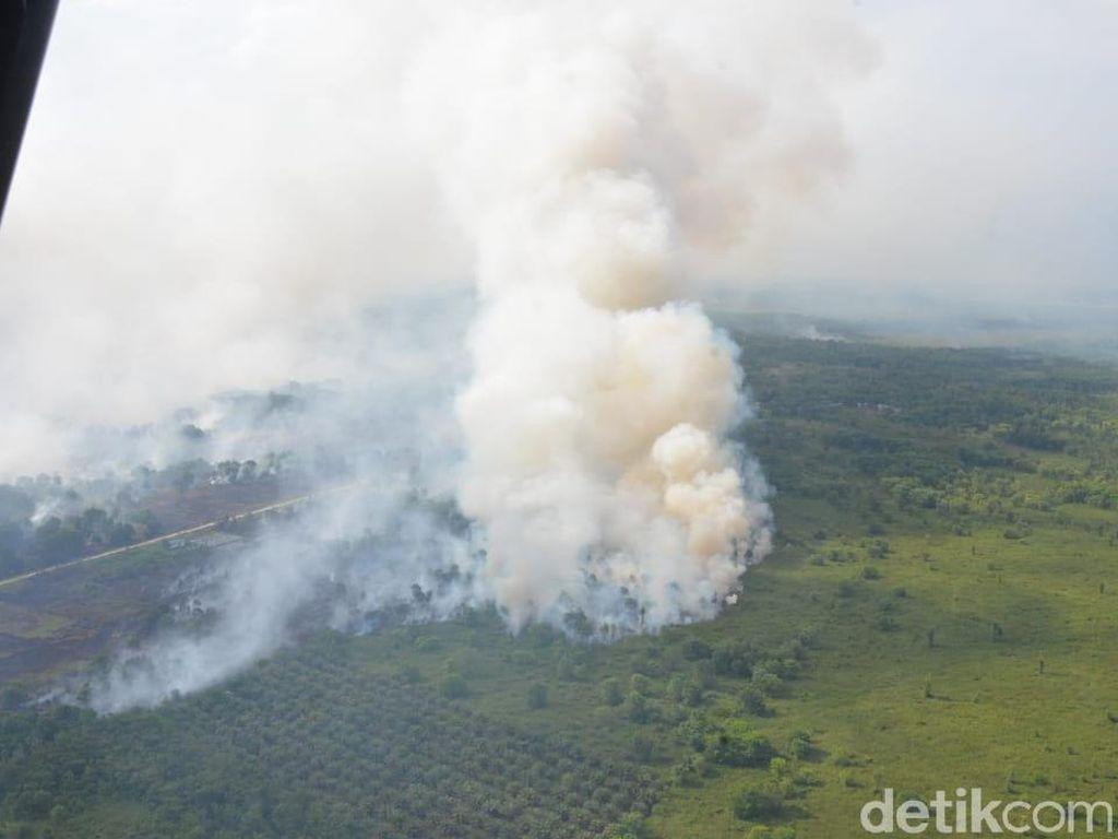 Begini Ngerinya Kebakaran Hutan di Kubu Raya Kalbar
